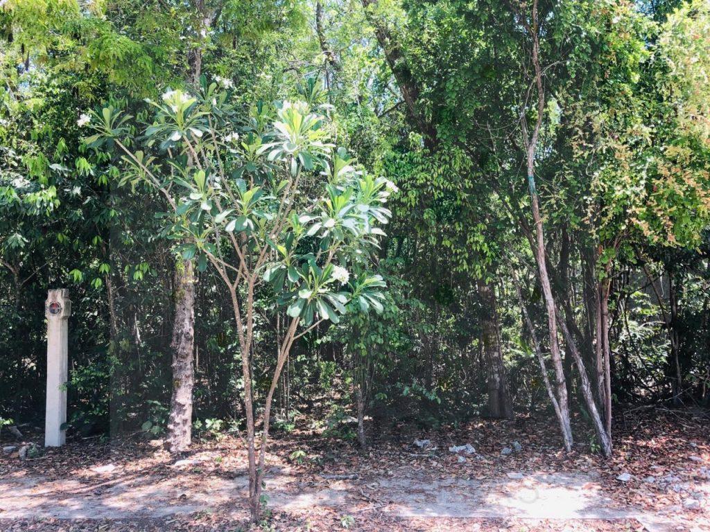Lote unifamiliar en Aldea Zama ideal para construir vivienda – Tulum